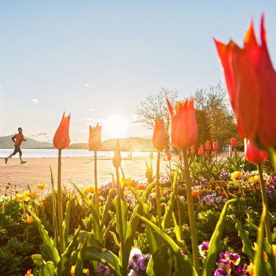 Blumen in der Ostbucht von Klagenfurt am Wörthersee